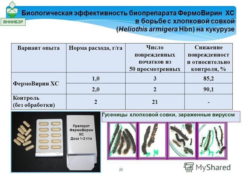 Вариант опыта Норма расхода, г/га Число поврежденных початков из 50 просмотренных Снижение поврежденность и относительно контроля, % Фермо Вирин ХС 1,0385,2 2,0290,1 Контроль (без обработки) 221- Биологическая эффективность биопрепарата Фермо Вирин Х