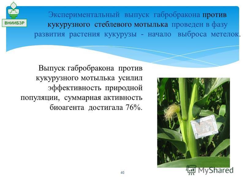 Экспериментальный выпуск габробракона против кукурузного стеблевого мотылька проведен в фазу развития растения кукурузы - начало выброса метелок. Выпуск габробракона против кукурузного мотылька усилил эффективность природной популяции, суммарная акти