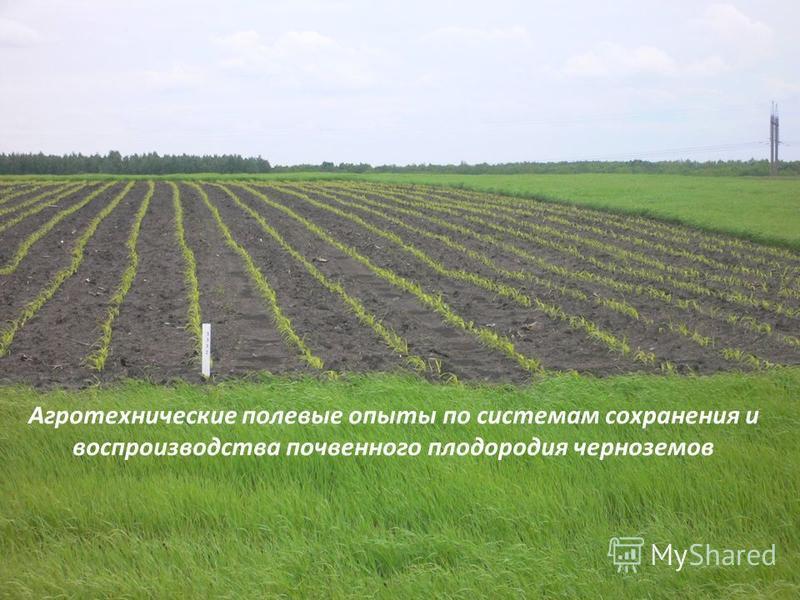 Агротехнические полевые опыты по системам сохранения и воспроизводства почвенного плодородия черноземов