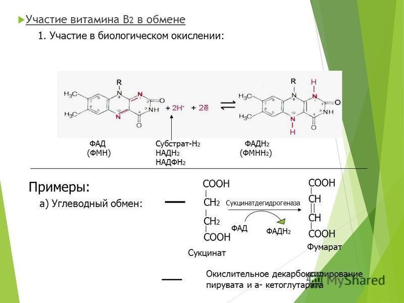 Участие витамина В 2 в обмене 1. Участие в биологическом окислении: ФАД (ФМН) ФАДН 2 (ФМНН 2 ) а) Углеводный обмен: Субстрат-Н 2 НАДН 2 НАДФН 2 СООН СН 2 СООН СН СООН ФАД ФАДН 2 Сукцинатдегидрогеназа Сукцинат Фумарат Примеры: Окислительное декарбокси