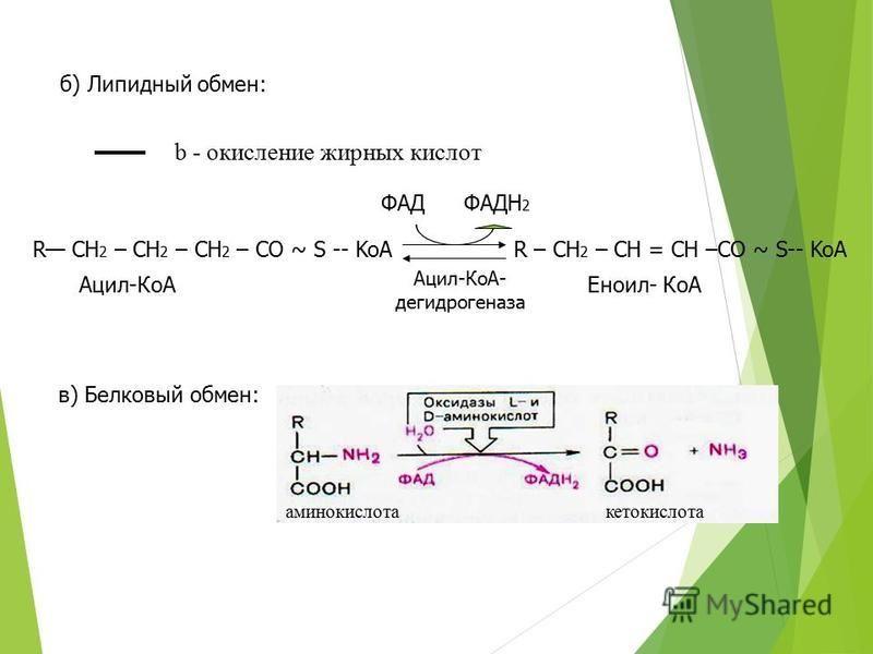 б) Липидный обмен: ФАДФАДН 2 Ацил-КоА- дегидрогеназа R CH 2 – CH 2 – CH 2 – CO ~ S -- KoA Ацил-КоА R – CH 2 – CH = CH –CO ~ S-- KoA Еноил- КоА в) Белковый обмен: b - окисление жирных кислот аминокислотакетокислота