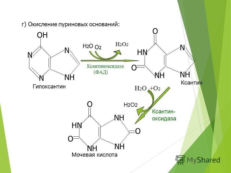 г) Окисление пуриновых оснований: H2OH2O H2O2H2O2 O2O2 Ксантиноксидаза (ФАД) HN NH N O O Ксантин N N N NH OH Гипоксантин HN NH O O O Мочевая кислота Н 2 О +О 2 H2O2H2O2 Ксантин- оксидаза