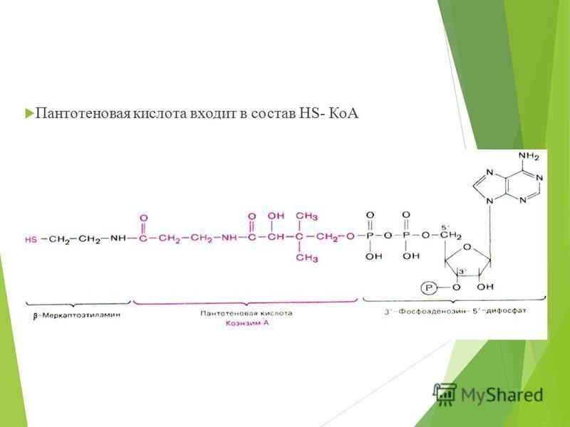 Пантотеновая кислота входит в состав HS- КоА