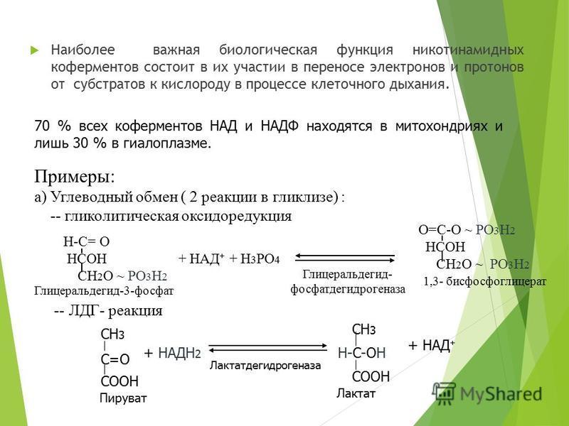 Наиболее важная биологическая функция никотинамидных коферментов состоит в их участии в переносе электронов и протонов от субстратов к кислороду в процессе клеточного дыхания. 70 % всех коферментов НАД и НАДФ находятся в митохондриях и лишь 30 % в ги