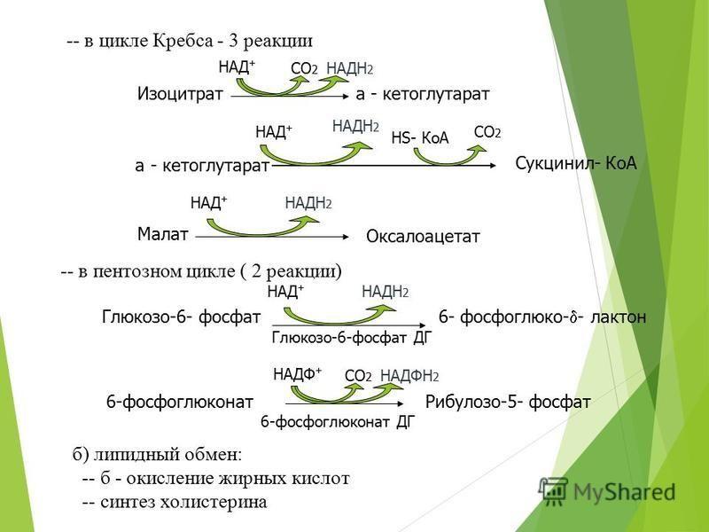 -- в цикле Кребса - 3 реакции -- в пентозном цикле ( 2 реакции) б) липидный обмен: -- б - окисление жирных кислот -- синтез холестерина а - кетоглутарат Сукцинил- КоА НАД + НАДН 2 СО 2 НS- КоА Малат Оксалоацетат Изоцитрата - кетоглутарат НАД + НАДН 2