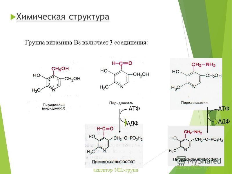 Химическая структура АТФ АДФ АТФ АДФ Группа витамина В 6 включает 3 соединения: акцептор NH 2 -групп Донор NH 2 - групп
