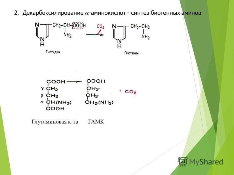 2. Декарбоксилирование -аминокислот - синтез биогенных аминов Глутаминовая к-таГАМК
