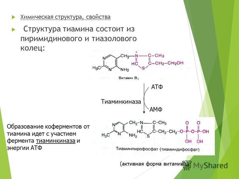 Химическая структура, свойства Структура тиамина состоит из пиримидинового и тиазолового колец: Образование коферментов от тиамина идет с участием фермента тиаминкиназа и энергии АТФ АТФ АМФ Тиаминкиназа (активная форма витамина)
