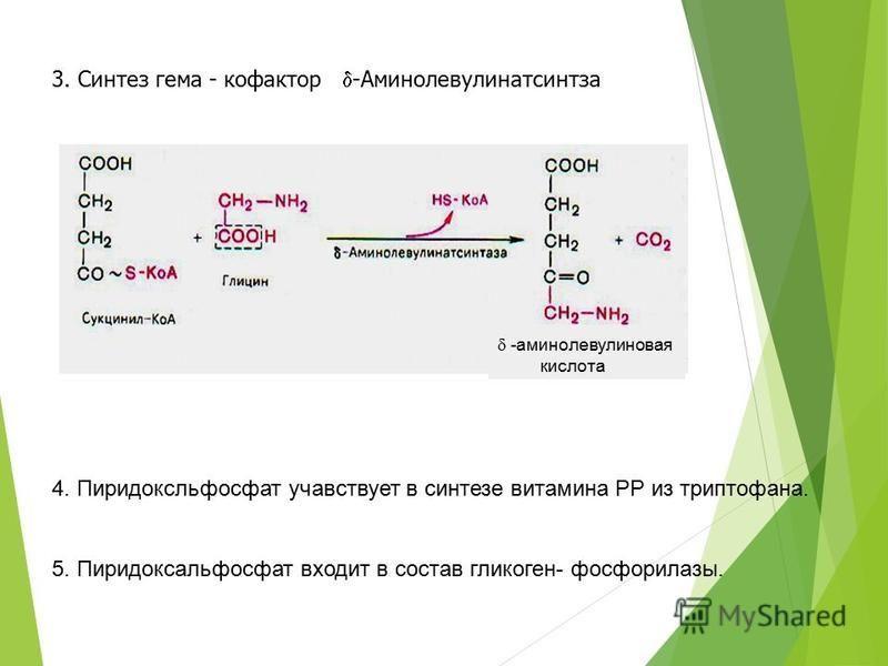 3. Синтез гема - кофактор -Аминолевулинатсинтза 4. Пиридоксльфосфат участвует в синтезе витамина РР из триптофана. 5. Пиридоксальфосфат входит в состав гликоген- фосфорилазы. -аминолевулиновая кислота