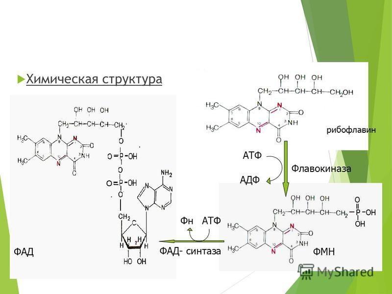 Химическая структура рибофлавин ФМНФАД АТФ АДФ Флавокиназа ФнАТФ ФАД- синтеза