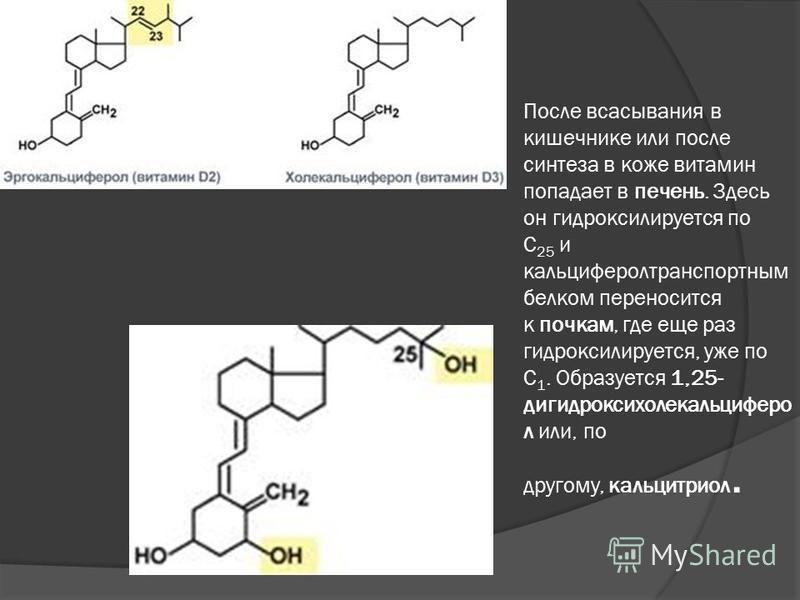 После всасывания в кишечнике или после синтеза в коже витамин попадает в печень. Здесь он гидроксилируется по С 25 и кальциферол транспортным белком переносится к почкам, где еще раз гидроксилируется, уже по С 1. Образуется 1,25- дигидроксихолекальци