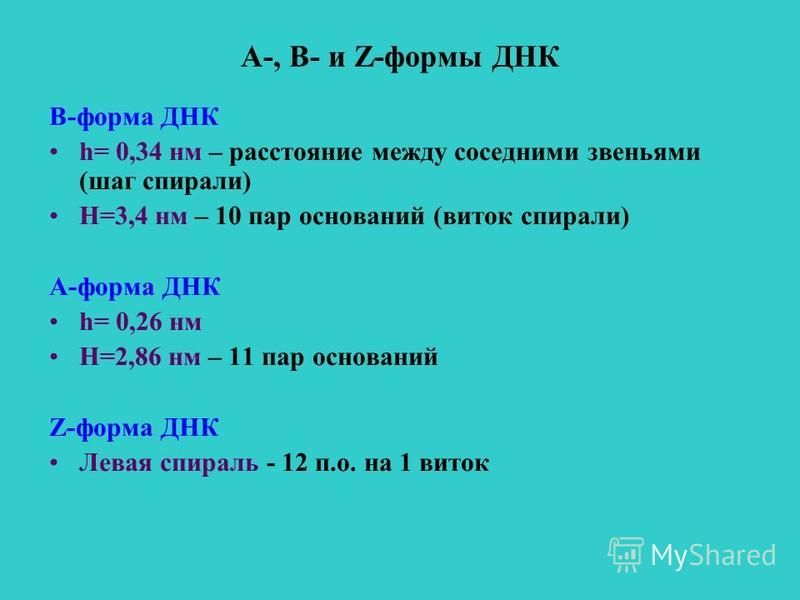 А-, В- и Z-формы ДНК В-форма ДНК h= 0,34 нм – расстояние между соседними звеньями (шаг спирали) Н=3,4 нм – 10 пар оснований (виток спирали) А-форма ДНК h= 0,26 нм Н=2,86 нм – 11 пар оснований Z-форма ДНК Левая спираль - 12 п.о. на 1 виток