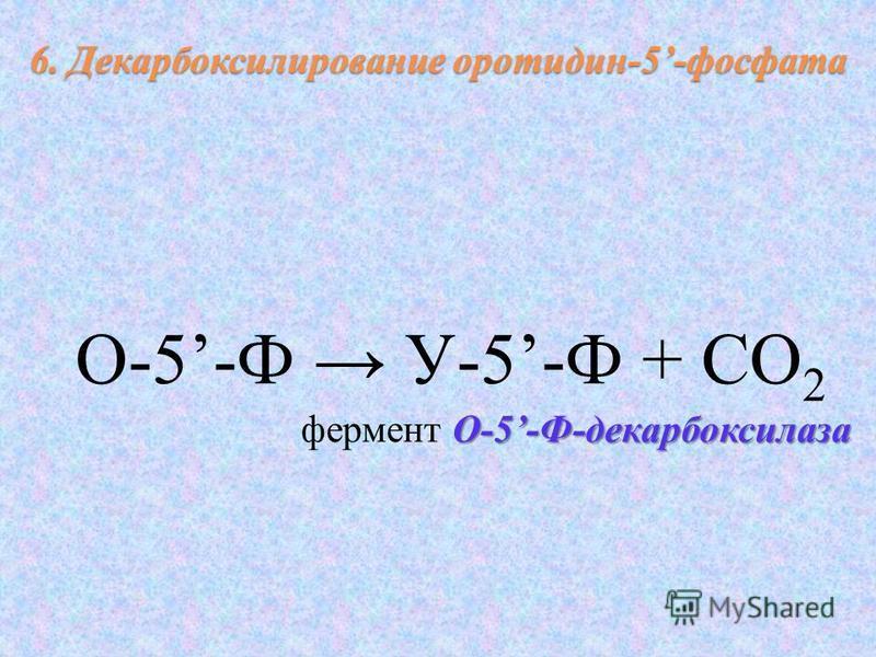 О-5-Ф У-5-Ф + СО 2 О-5-Ф-декарбоксилаза фермент О-5-Ф-декарбоксилаза 6. Декарбоксилирование оротидин-5-фосфата