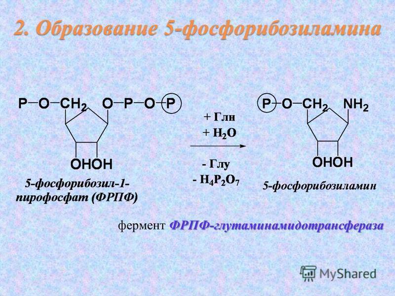ФРПФ-глутаминамидотрансфераза фермент ФРПФ-глутаминамидотрансфераза 2. Образование 5-фосфорибозиламина