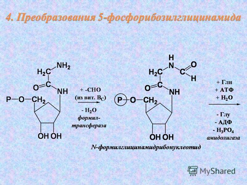 4. Преобразования 5-фосфорибозилглицинамида