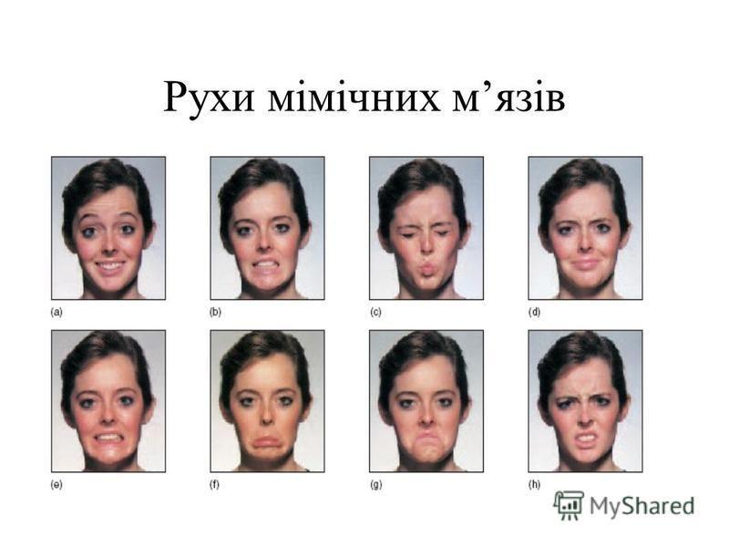 Рухи мімічних мязів