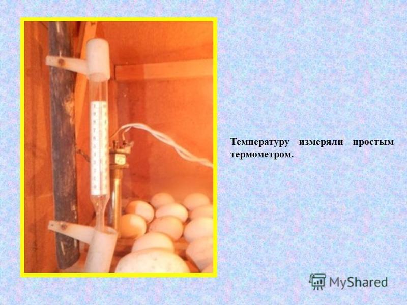 Температуру измеряли простым термометром.