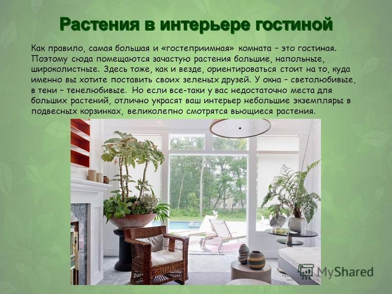Как правило, самая большая и «гостеприимная» комната – это гостиная. Поэтому сюда помещаются зачастую растения большие, напольные, широколистные. Здесь тоже, как и везде, ориентироваться стоит на то, куда именно вы хотите поставить своих зеленых друз