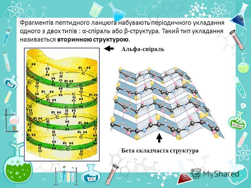 Фрагментів пептидного ланцюга набувають періодичного укладання одного з двох типів : α-спіраль або β-структура. Такий тип укладання називається вторинною структурою. Альфа-спіраль Бета складчаста структура