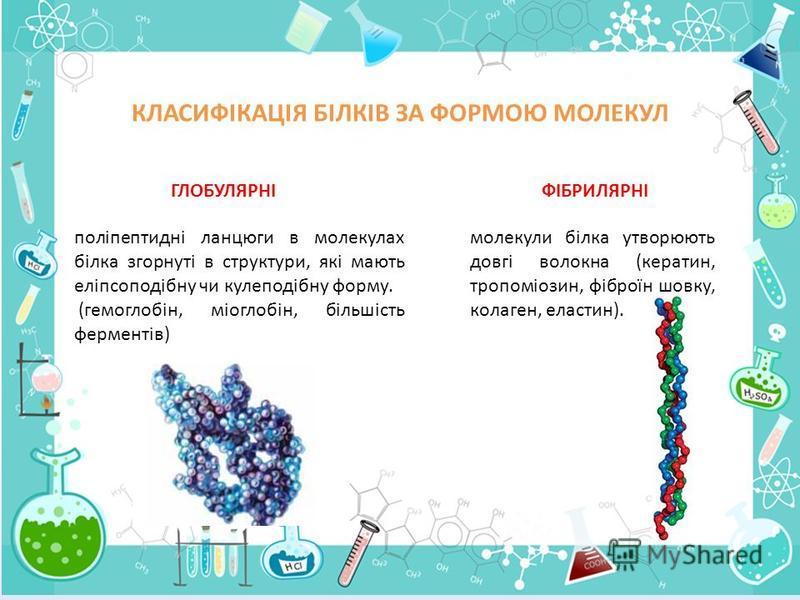 КЛАСИФІКАЦІЯ БІЛКІВ ЗА ФОРМОЮ МОЛЕКУЛ ГЛОБУЛЯРНІ поліпептидні ланцюги в молекулах білка згорнуті в структури, які мають еліпсоподібну чи кулеподібну форму. (гемоглобін, міоглобін, більшість ферментів) ФІБРИЛЯРНІ молекули білка утворюють довгі волокна