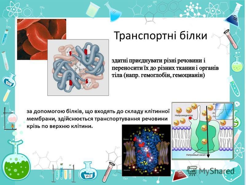 Транспортні білки за допомогою білків, що входять до складу клітинної мембрани, здійснюється транспортування речовини крізь по верхню клітини.