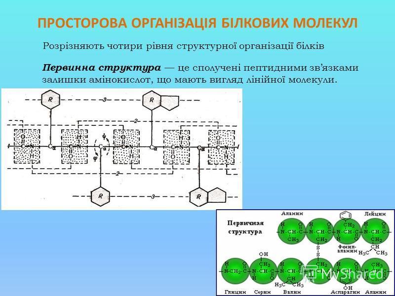 ПРОСТОРОВА ОРГАНІЗАЦІЯ БІЛКОВИХ МОЛЕКУЛ Розрізняють чотири рівня структурної організації білків Первинна структура це сполучені пептидними звязками залишки амінокислот, що мають вигляд лінійної молекули.