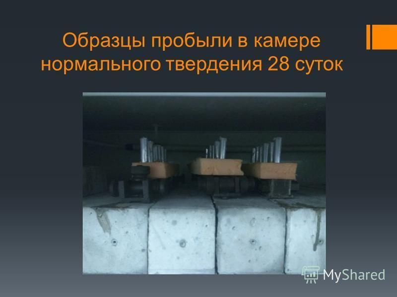 Образцы пробыли в камере нормального твердения 28 суток