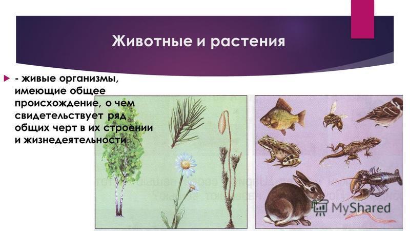 Животные и растения - живые организмы, имеющие общее происхождение, о чем свидетельствует ряд общих черт в их строении и жизнедеятельности.