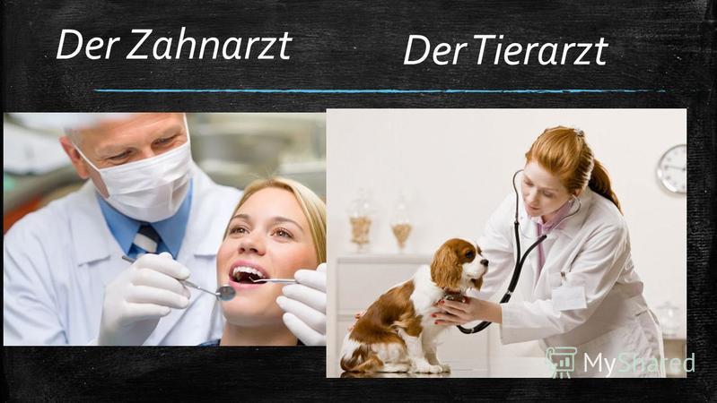 Der Zahnarzt Der Tierarzt