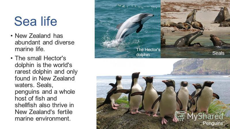 Sea life New Zealand has abundant and diverse marine life. The small Hector's dolphin is the world's rarest dolphin and only found in New Zealand waters. Seals, penguins and a whole host of fish and shellfish also thrive in New Zealand's fertile mari