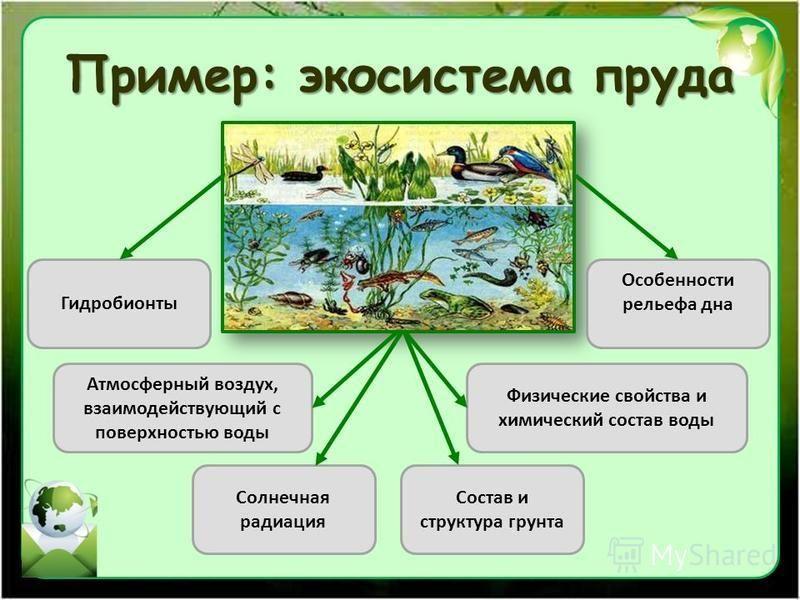 Пример: экосистема пруда Гидробионты Атмосферный воздух, взаимодействующий с поверхностью воды Солнечная радиация Состав и структура грунта Физические свойства и химический состав воды Особенности рельефа дна