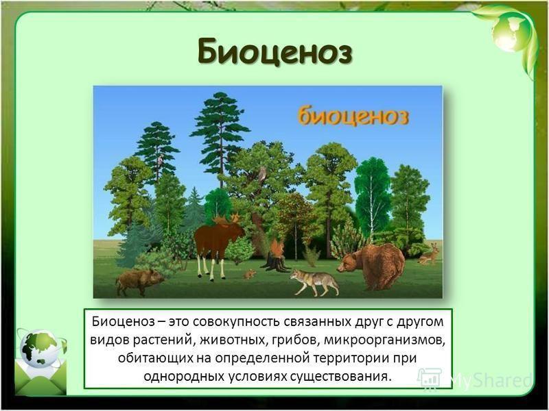 Биоценоз Биоценоз – это совокупность связанных друг с другом видов растений, животных, грибов, микроорганизмов, обитающих на определенной территории при однородных условиях существования.