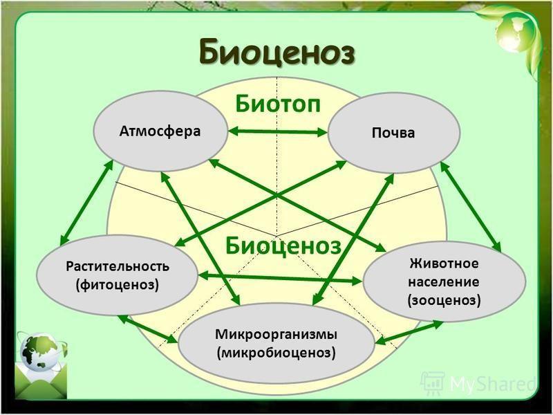 Биоценоз Биотоп Биоценоз Атмосфера Почва Животное население (зооценоз) Микроорганизмы (микробиоценоз) Растительность (фитоценоз)