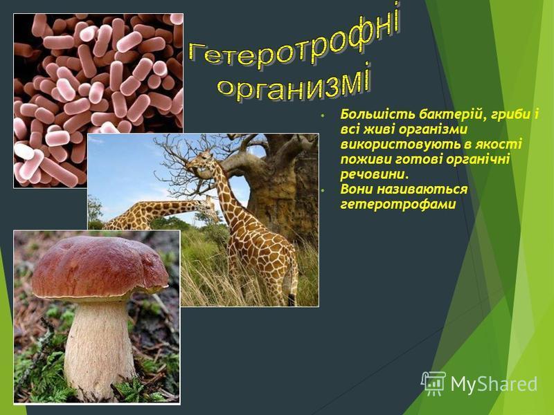 Большість бактерій, гриби і всі живі організми використовують в якості поживи готові органічні речовини. Вони називаються гетеротрофами