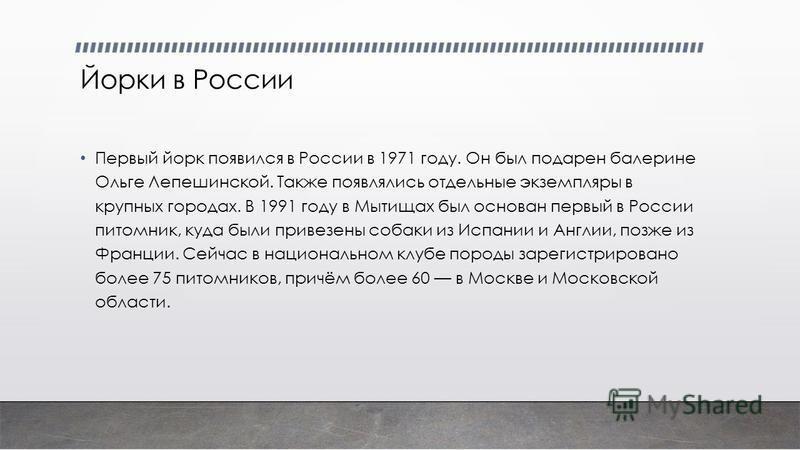 Йорки в России Первый йорк появился в России в 1971 году. Он был подарен балерине Ольге Лепешинской. Также появлялись отдельные экземпляры в крупных городах. В 1991 году в Мытищах был основан первый в России питомник, куда были привезены собаки из Ис