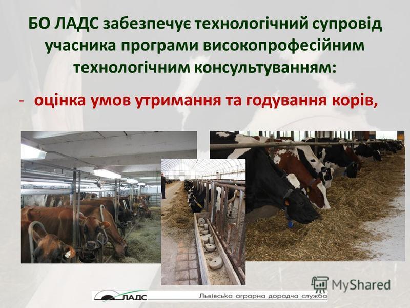 БО ЛАДС забезпечує технологічний супровід учасника програми високопрофесійним технологічним консультуванням: -оцінка умов утримання та годування корів,
