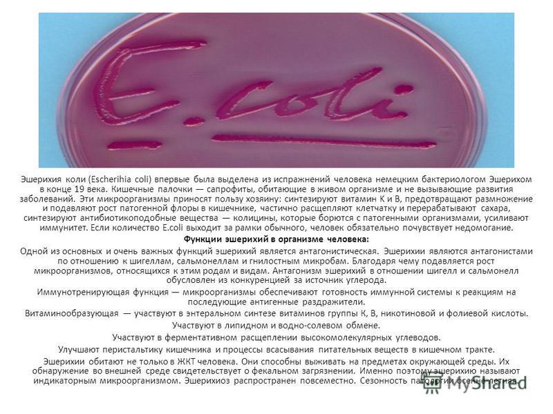 Эшерихия коли (Escherihia coli) впервые была выделена из испражнений человека немецким бактериологом Эшерихом в конце 19 века. Кишечные палочки сапрофиты, обитающие в живом организме и не вызывающие развития заболеваний. Эти микроорганизмы приносят п