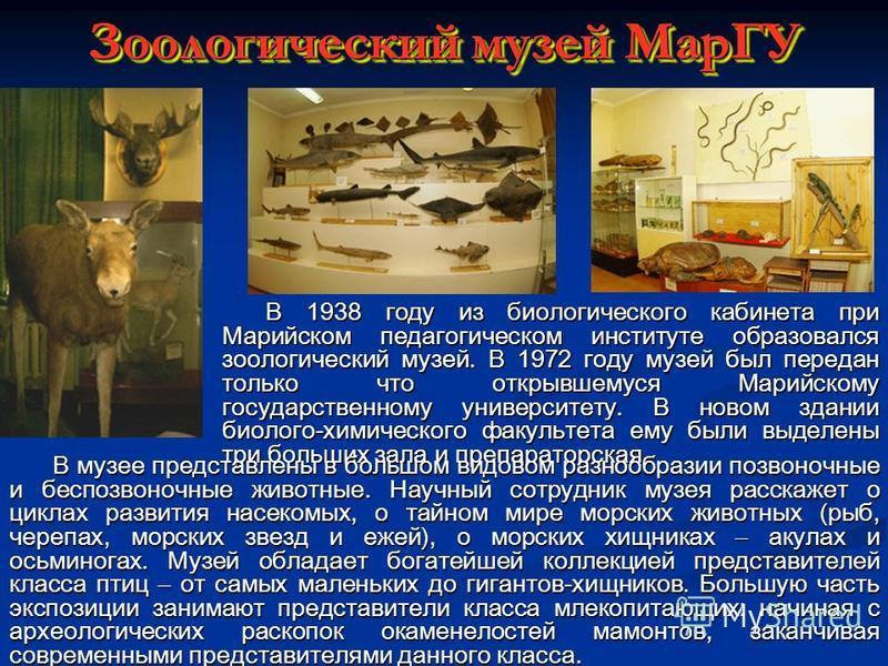 Зоологический музей МарГУ В 1938 году из биологического кабинета при Марийском педагогическом институте образовался зоологический музей. В 1972 году музей был передан только что открывшемуся Марийскому государственному университету. В новом здании би