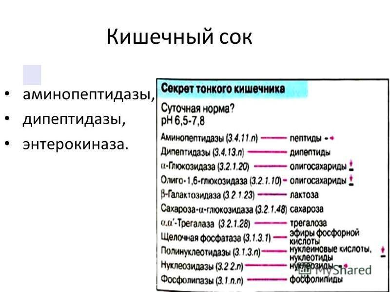 Кишечный сок аминопептидазы, дипептидазы, энтерокиназа.