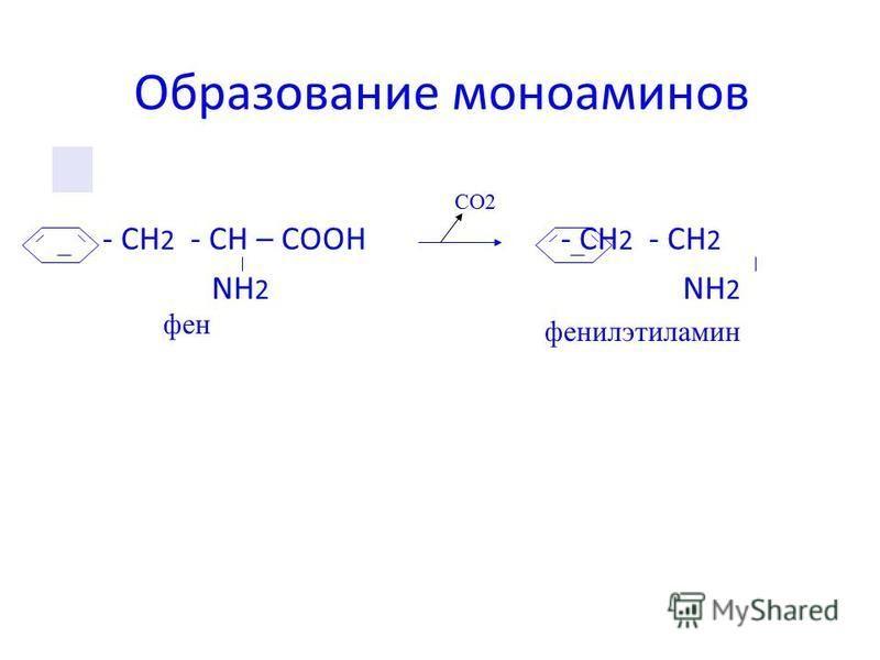 Образование моноаминов - CH 2 - СН – СООН - CH 2 - СН 2 NH 2 NH 2 СО2 фенилэтиламин фен