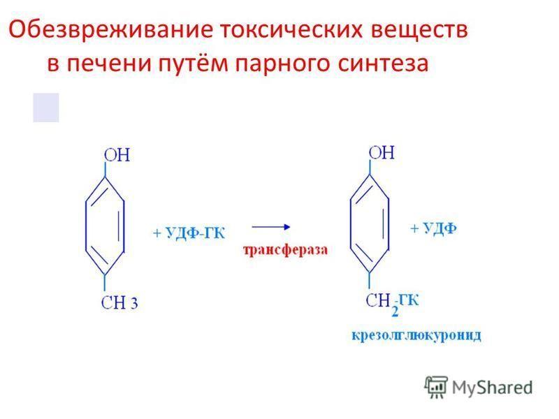 Обезвреживание токсических веществ в печени путём парного синтеза