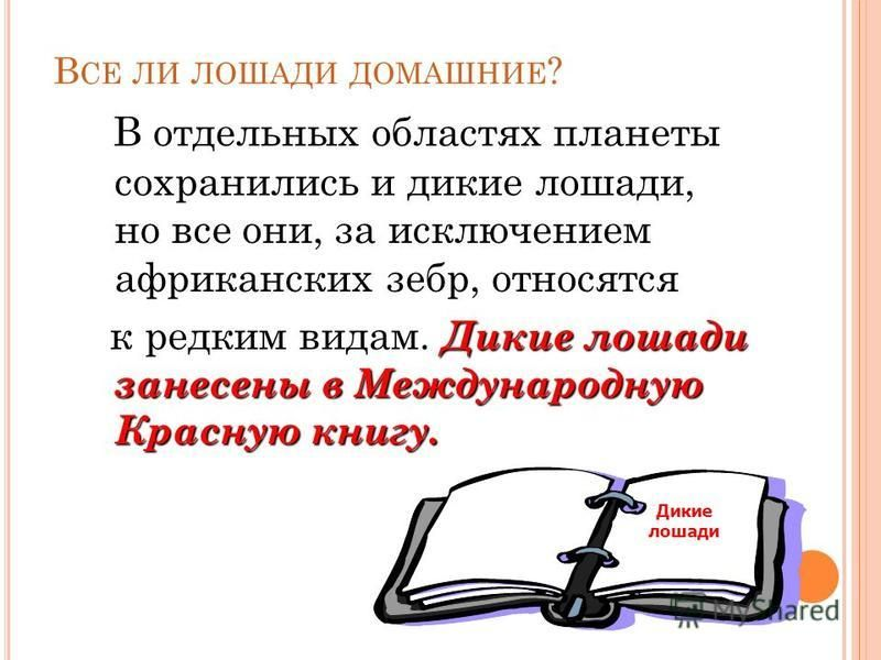 К ОННЫЙ СПОРТ