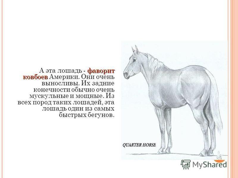 сотни пород Каждая порода отличается Многие столетия, люди развили сотни специализированных пород лошадей. У нас есть лошади для перетаскивания телег, плугов, лошади для рыцарей и героев. Есть также лошади для скачек. У нас есть крошечные породы пони