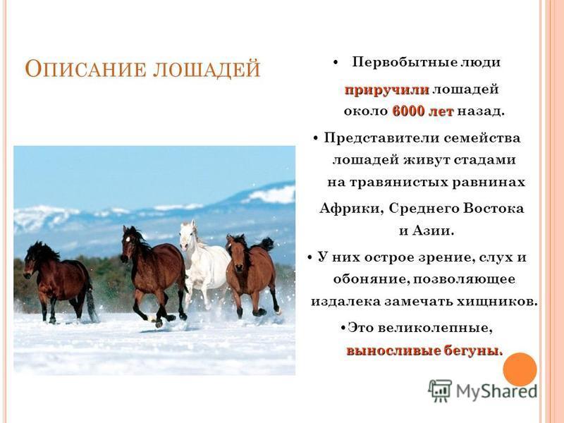 П РЕЗЕНТАЦИЯ ОТВЕТИТ НА ВОПРОСЫ : Когда человек приручил лошадь? Какой окраски бывают лошади? Сколько существует видов лошадей? Где используют лошадей? Красота конного спорта. Рекорды у лошадей.