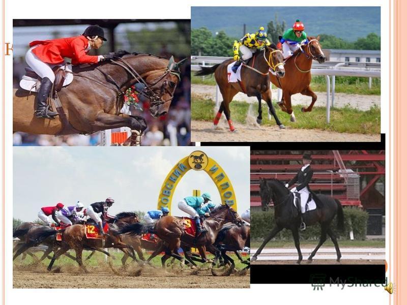 К ОННЫЙ СПОРТ Скачки и бега - это древний вид спорта. Еще античные греки и римляне устраивали соревнования между самыми резвыми лошадьми. Сегодня забеги устраивают на ровной местности, и в них участвуют чистокровные животные.