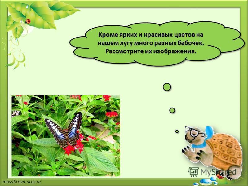 Кроме ярких и красивых цветов на нашем лугу много разных бабочек. Рассмотрите их изображения.