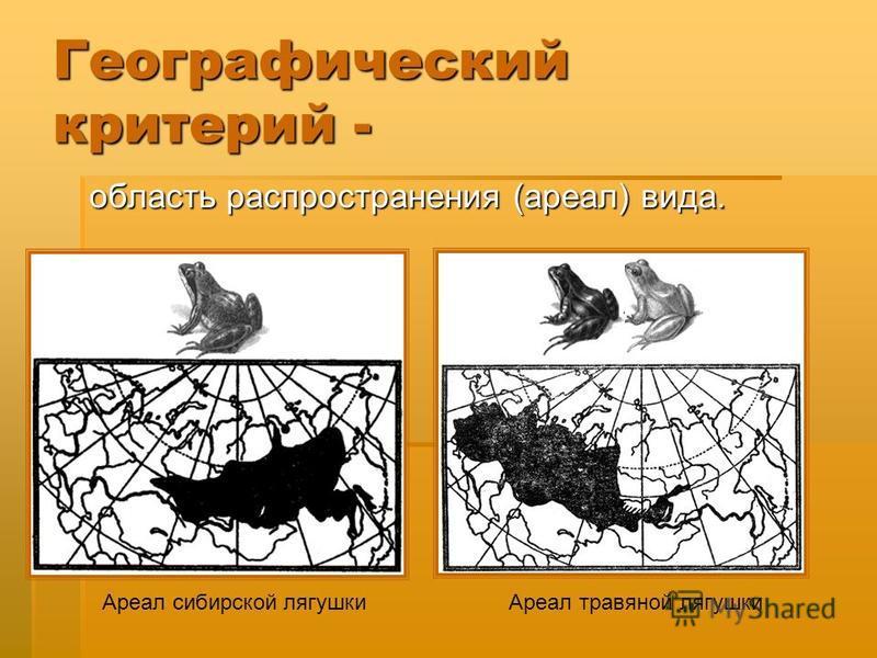 Географический критерий - область распространения (ареал) вида. область распространения (ареал) вида. Ареал сибирской лягушки Ареал травяной лягушки