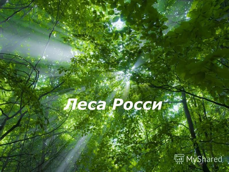 Free Powerpoint Templates Леса Росси