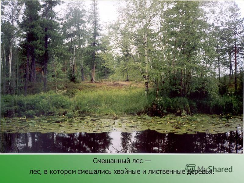 Смешанный лес лес, в котором смешались хвойные и лиственные деревья.
