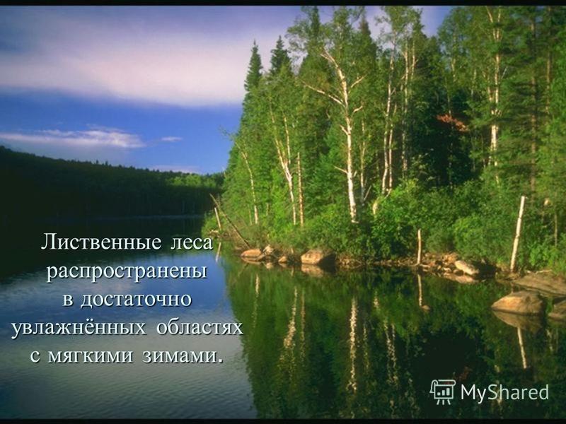 Лиственные леса распространены в достаточно увлажнённых областях с мягкими зимами.